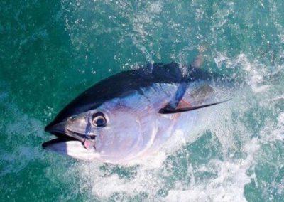 Charter de pesca